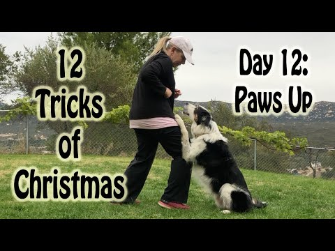 12 Tricks of Christmas - Day 12: Paws Up