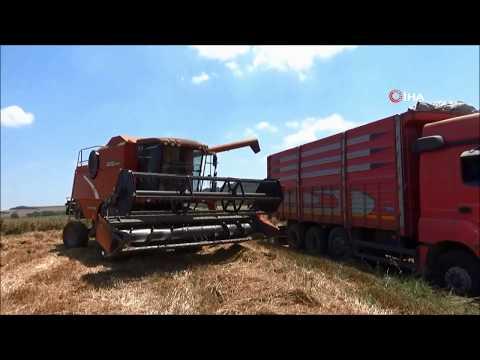 Trakya'da Hasat Vakti... Biçerdöverler Tarlalara Girdi