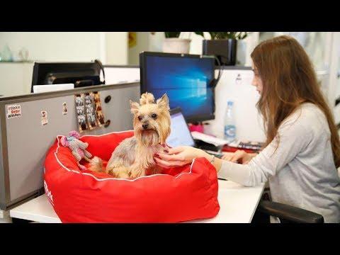 Pet-friendly офис в Москве photo