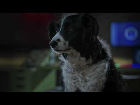 Como Perros y Gatos: La patrulla Unida ? Spot 20