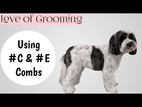Dog Grooming Using the #C and #E Comb Attachment on a Drop Coated Dog