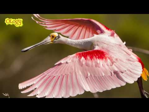 Pregunta a una científica sobre la biodiversidad de Cuba