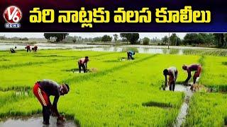 వరి నాట్లకు వలస కూలీలు | Farmers Prefer Bengali Migrant Labour | V6 News - V6NEWSTELUGU
