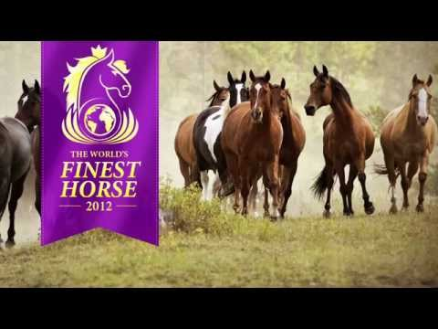 World's Finest Horse 2012