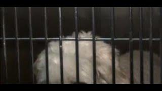 Veterinaria recomienda cuidar a mascotas de químicos desinfectantes