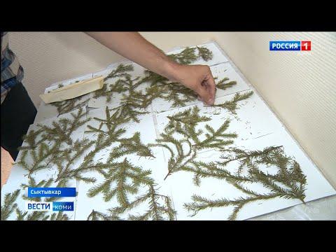 В России создаётся федеральный реестр ДНК деревьев