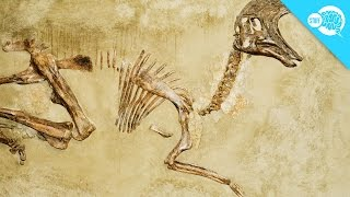 Why Don't All Skeletons Become Fossils?