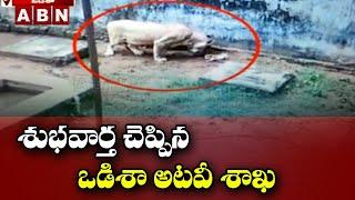 Odisha Forest Dept Goods News : Lion Gives Birth To 3 Baby Lion | ABN Telugu - ABNTELUGUTV