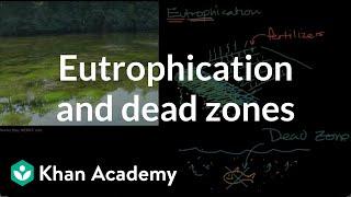Eutrophication and dead zones