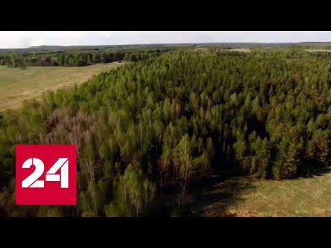 Вокруг Кемерова и Новокузнецка появится зеленый пояс – Россия 24