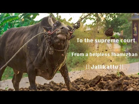 To the supreme court - From a helpless Thamizhan || Jallikattu