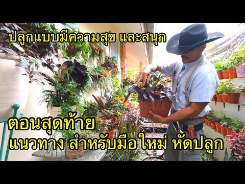แนะแนวทาง-การปลูกต้นไม้ดอกไม้-