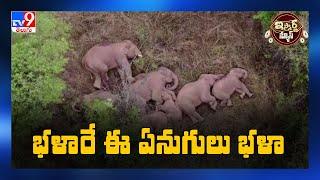 iSmart News : భళారే ఈ ఏనుగులు భళా - TV9 - TV9