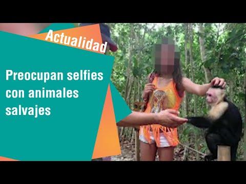 Selfies con animales salvajes preocupan a expertos