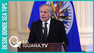 OEA utilizó de manera facciosa a la misión de observación electoral en Bolivia en 2019