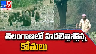 Telangana : తెలంగాణ పంటలపై వానర సైన్యం దాడి ...  ఇలాగైతే  పంటలు పండించేది ఎలా ?   Monkeys  - TV9 - TV9