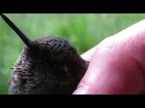 connectYoutube - this little bird has a death wish 496 kbps