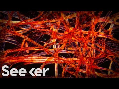 How Millions of Microscopic Fibers Are Ending Up in Our Bodies | The Swim