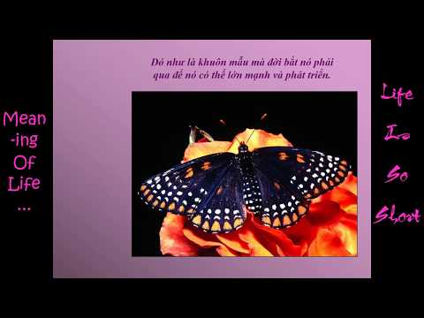 Meaning Of Life - Lessons From Butterflies - Try Your Best