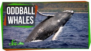 The World's Most Abundant Mineral, and Oddball Whales