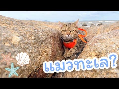 แมวทะเล-เที่ยวทะเลบางแสน🌴-|-กร