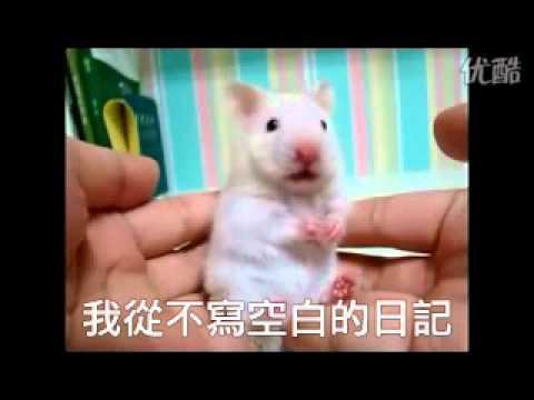 """老鼠聽到""""唸你""""的反應"""