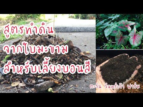 สูตรทำดินจากใบมะขาม-สำหรับเลี้