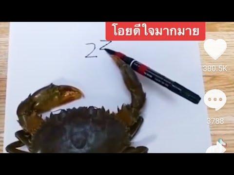 คลิปปูบวกเลข-ไวรัล-Tiktok-ปูท