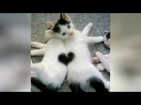 connectYoutube - Super CUTE & FUNNY ANIMALS - Get ready to LAUGH REALLY HARD!