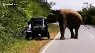 فيل يهاجم سائق مع ام وابنتها