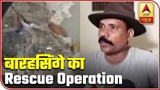 Visuals of Barasingha's rescue operation in Muzaffarnagar - ABPNEWSTV
