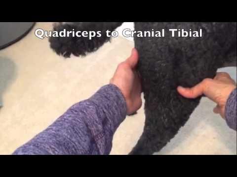 Cross Fiber Massage for Dogs
