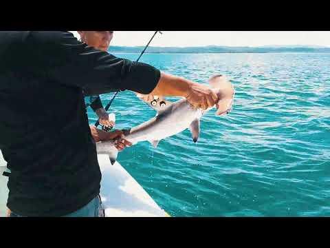 MarViva denuncia a Senasa por aprobar solicitudes de exportación de tiburón sin tener autoridad