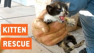 Kittens Rescued From Water Pipes | Animal Rescue