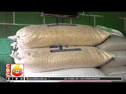 Incrementa mas de 100 lempiras el precio de la carga de maíz