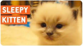Sleepy Kitten Is Sleepy | Sleep Right Meow