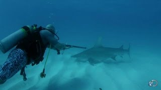 Taking Shark DNA Samples | Shark Week