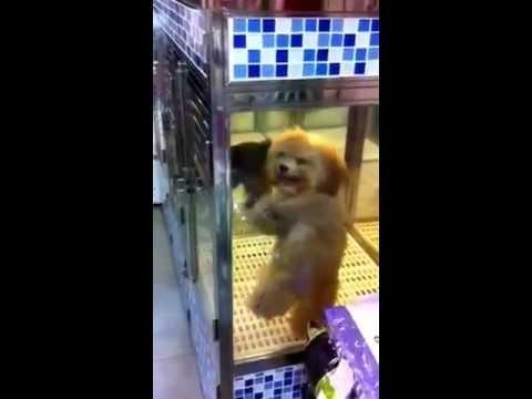 可愛跳舞狗狗 cute dancing dog
