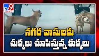 హైదరాబాద్ వాసులకు కుక్కల బెడద - TV9 - TV9