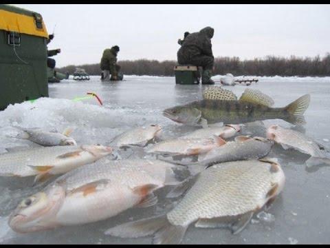 последовательны перепрыгивайте ютуб крупные экземпляры рыб выловленые в волге видио видео позволяет