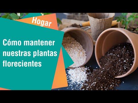 Cómo mantener nuestras plantas florecientes   Hogar