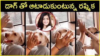 Rashmika Mandanna Playing With Her Dog | Actress Rashmika | Rajshri Telugu - RAJSHRITELUGU