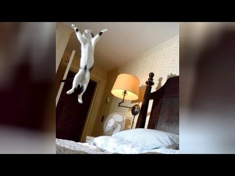 connectYoutube - Ultimate TRY NOT TO LAUGH challenge - Hilarious ANIMAL VIDEOS!