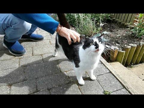 รวมคลิป-จอร์จ-แมวข้างบ้าน-ม