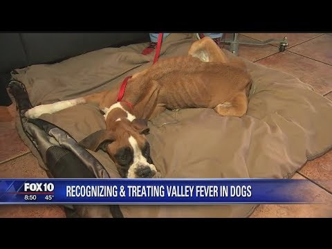connectYoutube - Delilah the dog suffering from severe case of Valley Fever