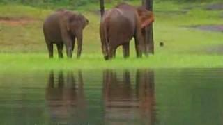 Thekkady Wildlife Destination, Idukki, Kerala, India