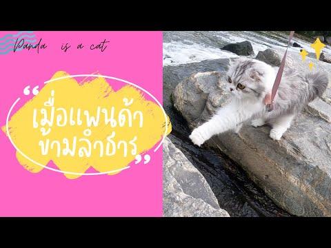 Panda-is-A-Cat-:-พาแมวไปเดินเล