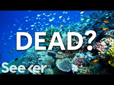 Is The Great Barrier Reef Actually Dead?