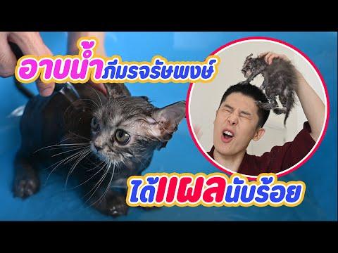 อาบน้ำแมวครั้งแรก-วุ่ยวายขนาดไ