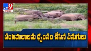 Andhra Pradesh : చిత్తూరు జిల్లాలో ఏనుగుల బీభత్సం - TV9 - TV9